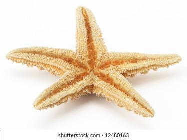 starfish star dry tropical underwater isolated marine