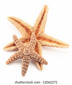 starfish two close up detail sea life tropical