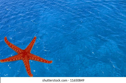 Starfish in the water