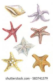 starfish watercolor drawing