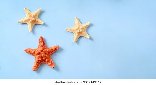 Starfishes are marine echinoderm with five arms. Undersides of arms bear tube feet for locomotion and, in predatory species, for opening shells of mollusks. - Shutterstock ID 2042142419
