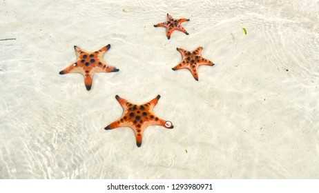 Starfishes on the Phu quoc island, beautiful red starfish in crystal clear sea, travel concept on tropical starfish beach