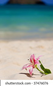 Stargazer lily in sand on beach, shallow depth of field. (Artificial flower)