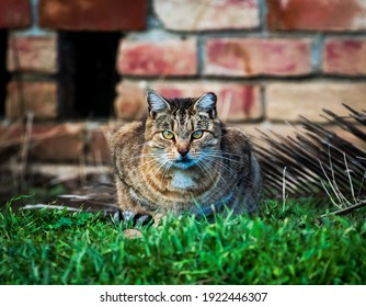 A staring Contest with a feral cat