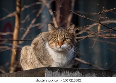 Staring male cat