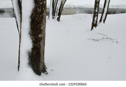 A stark design made by snow-covered tree trunks and a stream in the background.