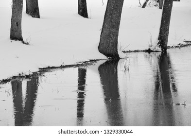 Stark tree trunks in the snow reflected in a pond.