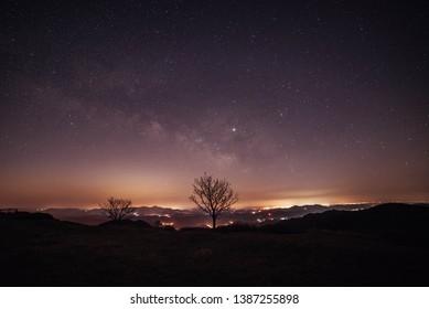 Starlight Night Sky and Tree