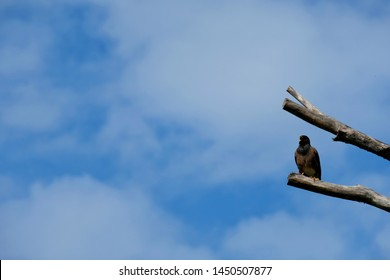 Common Bird Sounds Images, Stock Photos & Vectors   Shutterstock