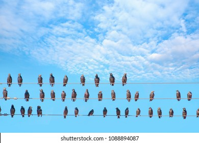 Starlings sitting on a electrical wire against cloudy sky