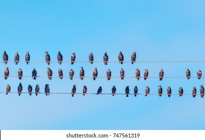 Amazing Birds On A Telephone Wire Images Stock Photos Vectors Shutterstock Wiring 101 Capemaxxcnl