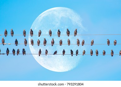 """Starlings sitting on a electrical wire against super white moon """"Elements of this image furnished by NASA"""""""