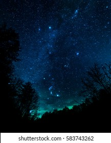 Starry night in forest