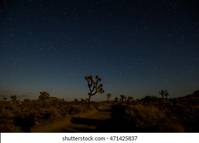Starry Night In Joshua Tree National Park