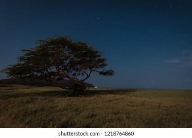 Starry night on the desolate beach of Molokai, Hawaii