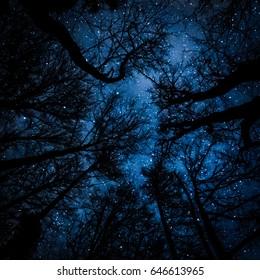 Starry night through tree trunks