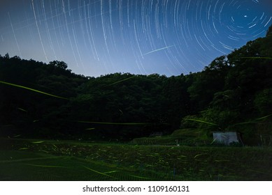 Starry sky and the firefly