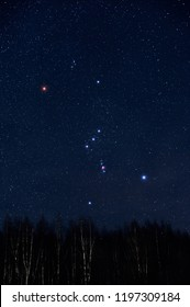 Starry sky and Orion constellation above birch forest in winter sky.