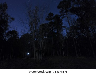 Stars above a dark line of trees with a flashlight