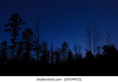 Stars and blue sky against a black line of trees