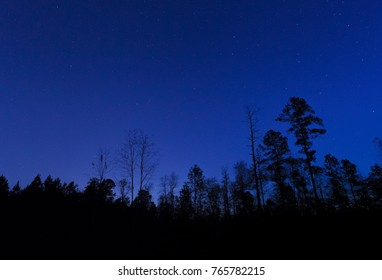 Stars brightly over a forest in North Carolina