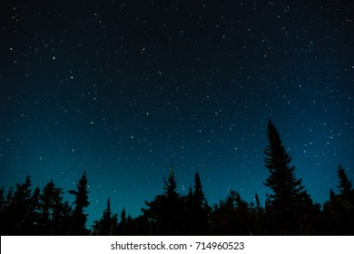 Stars in the night sky against the backdrop of silhouettes of trees
