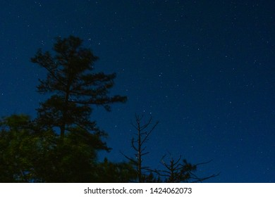 Stars are seen behind a tree in Red River Gorge, Kentucky