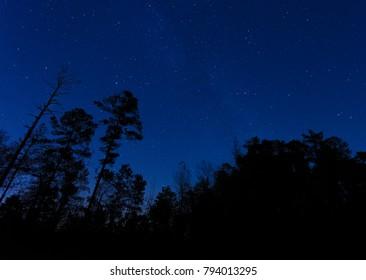 Stars shining brightly behind the trees in North Carolina