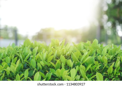 Start a fresh day at the park with the green of the tree and warm sunligh.