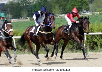 Start gates for horse races for the prize of 1 May in Caucasus