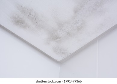 Start of mold build-up on bathroom ceiling, still with simple cleaning solution