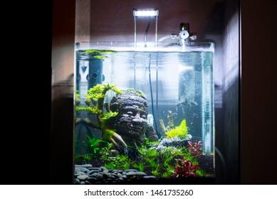 start of a nano aquascape week 1