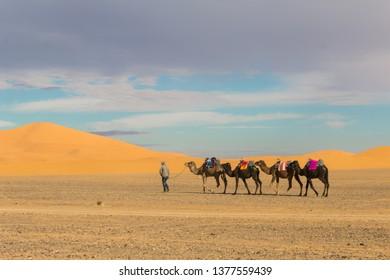 The start of the Saharian safari