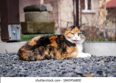Startled cat looks at me with contempt. Felis catus domesticus rests on heated rocks. English wild cat rests near his home.