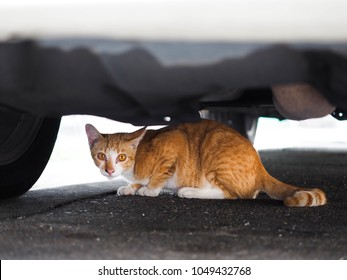 startled street tabby cat crawling under the car.