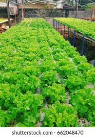 Start-up : Hydroponics Vegetable Farm Business It is a small business growing in Thailand. You can sell them as a raw material for restaurants in the neighborhood.