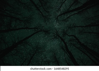 Stary night sky with the silhouette of trees - Shutterstock ID 1648548295