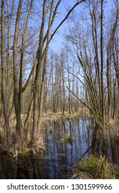 In the state of Brandenburg, Germany, there are numerous moors and other wetlands. In winter and spring there are beautiful views and reflections.