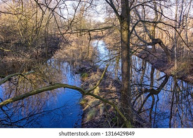 In the state of Brandenburg, Germany, there are numerous moors and other wetlands. Rare birds breed in the reeds. Seen in the Notte lowland near Löwenbruch, Ludwigsfelde.