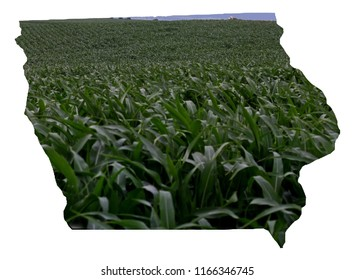 State of Iowa outline filled with green corn going into the distance miles
