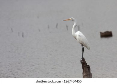 A stately white erget balances itself on a stump that protudes from a calm lake.