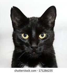 Static Cat Portrait