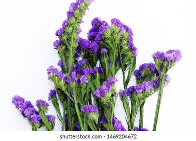 static flowers on white background