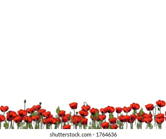 Stationary I designed with Red Poppies against a white background. Can be printed and used as stationary, used as stationary in a word processing program, or used as clipart.