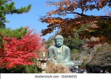 Statue of Amitabha Buddha (Daibutsu) located at the Kotokuin Temple in Kamakura, Japan in Autumn season