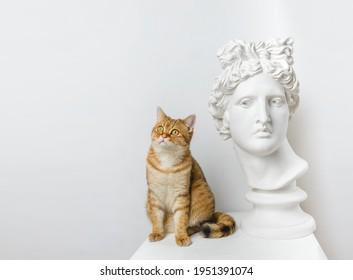 Statue. Isolated. British cat.A plaster statue of the head of Apollo looks sideways.Creative. Head of Apollo Belvedere