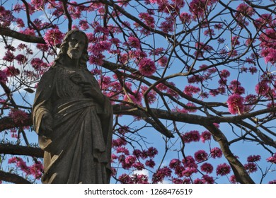 Statue of Jesus in front of ipe tree