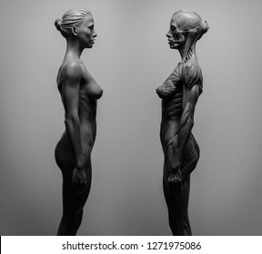 statue of a woman, muscles anatomy