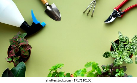 Stay home and gardening. Replanting flower in indoor garden. Potted green plants at home, garden supplies,urban jungle frame layout. Copy space.