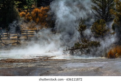 Steam from geysers. Upper Geyser Basin, Yellowstone National Park, Wyoming USA